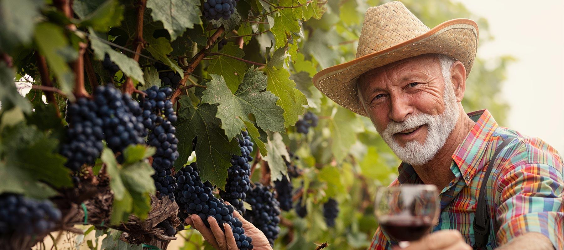 Bauer mit seinen Weinreben